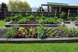 fall gardening australia vegetable garden a small place the buzz