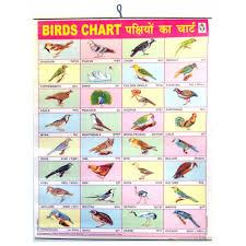birds cartoon share online
