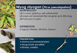 selected indigenous plants from southern tagalog region of the philip