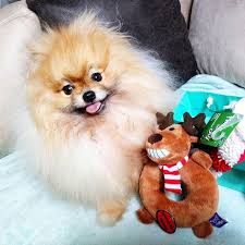 happy thanksgiving day to all my fluffy friends