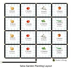 salsa garden layout how to grow a salsa garden