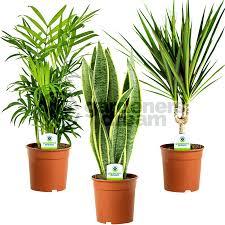 office design office pot plants office pot plants durban best