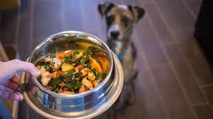 cuisine am icaine uip i tried cooking for my dogs here s what i learned eater