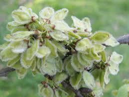 elm fruit backyard and beyond