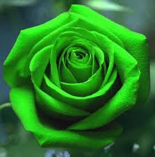 Lime Green Flowers - 2535 best todo rosas rocío images on pinterest flowers pretty