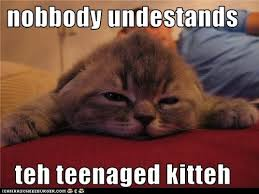 Depressed Cat Meme - lolcats depressed page 2 lol at funny cat memes funny cat