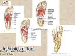 Anatomy Slides Natal Cleft Anatomy Image Collections Learn Human Anatomy Image