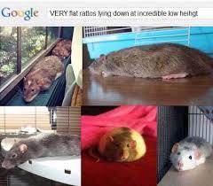 Rat Meme - rat meme tumblr