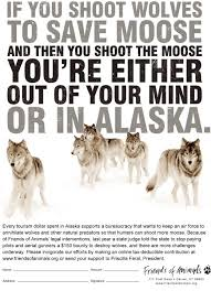 Alaska Records Search Stop Aerial Of Alaska S Wolves Howling For Justice