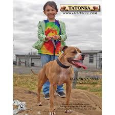 american pitbull terrier merchandise american pit bull terrier gazette magazine advertising