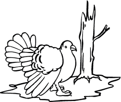 wild turkey coloring free printable coloring pages