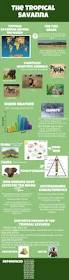 best 25 savanna biome ideas on pinterest savanna ecosystem