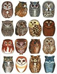 80 owl designs to ink