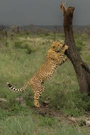african safari animals south african safari wildlife encounters in malaria free madikwe