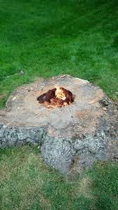 13 best tree stump images on outdoor projects tree