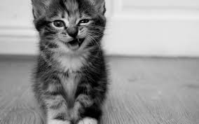 Cute Black And White Wallpapers by Cute Black And White Kitty Wallpaper 2560x1600 1848 Wallpaperup
