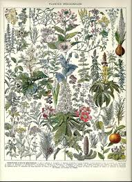 native american healing plants healing medicinal plants herbs 2 vintage french dictionary color