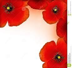 red poppy border stock photo image 18433640