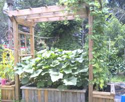 pergola plant trellis wonderful planter with trellis how to