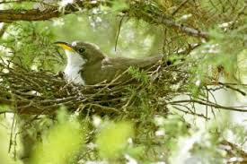 Birds In Your Backyard Want More Backyard Birds Plant A Mix Of Trees And Shrubs In Your