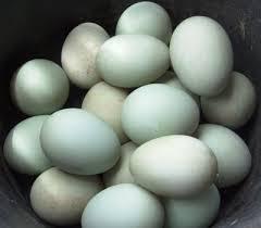 membuat telur asin berkualitas cara membuat telur asin herbal telur asin herbal
