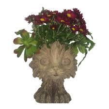 delray plants 8 3 4 in sansevieria zeylanica in pot 10sansz the