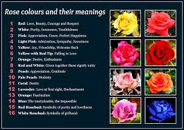 list of colours daveswordsofwisdom com beautiful rose colors and their meanings