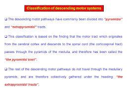 Pyramids Of The Medulla Pyramidal Pyramidal And Andextrapyramidal Tracts Tracts By Dr