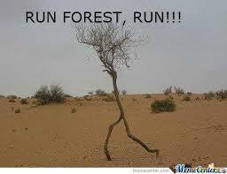 Meme Pun - pun forest pun by colmulhall meme center