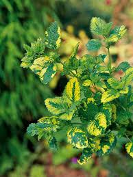 homelife top 15 indoor plants indoor herb garden plants home outdoor decoration