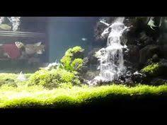 membuat aquascape bening cara mudah dan unik membuat aquascape youtube video pinterest