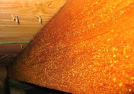 White Mold In Basement Dangerous by Orange Mold On Wood Dangerous Orange Mold