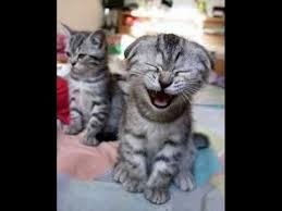 s e katzen spr che die besten 25 lachende katze ideen auf lachende tiere