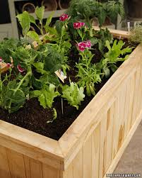 how to grow a successful container vegetable garden martha stewart