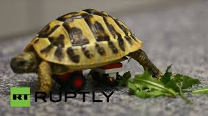 germany this turtle moves with lego wheelchair youtube
