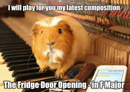 Shaved Guinea Pig Meme - funny guinea pig memes memes pics 2018