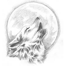 drawn howling wolf sketching pencil and in color drawn howling
