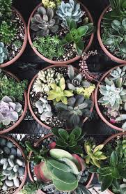 140 best i love plants images on pinterest plants indoor plants