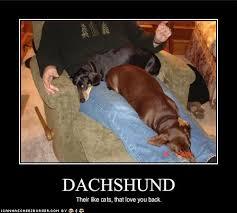 Weiner Dog Meme - funny weiner dog memes funny pics story