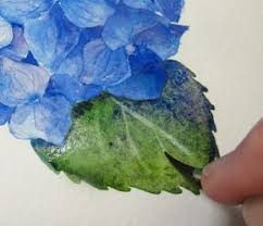 1106 best botanical watercolor images on pinterest watercolors