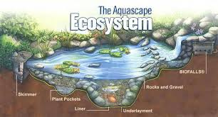 Aquascape Pond Pumps Frontier Ponds Aquascape Ecosystems