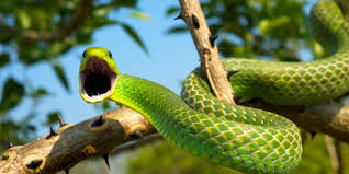 bbc earth almost all snakes have the same mindboggling superpower