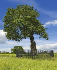 queen of hearts spirit halloween historic trees hearts of oak british heritage travel