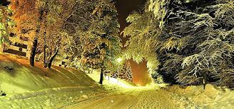 winter snow tree poster material taobao poster lynx poster