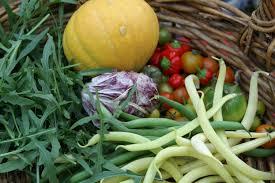 what to do in the kitchen garden in february suburban tomato