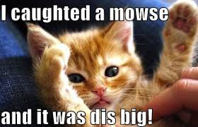 Funny Memes Of Cats - cat mouse funny memes