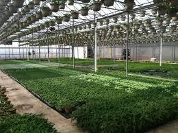 greenhouse gardening in colorado home outdoor decoration