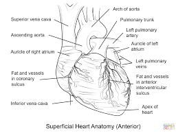 anatomy coloring pages heart coloring home