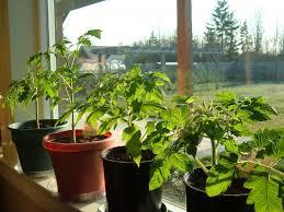 living room plants in 2017 living room decorative plants