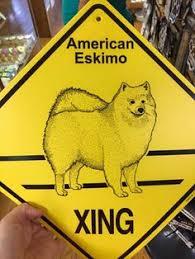 american eskimo dog breeders new england alaskan eskimo dog team iditarod u0026 urban mushing pinterest dogs
